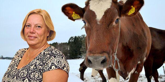 """""""Kon mer än bara en kött- och mjölkmaskin"""""""