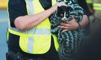 Polisen tappar djuranslag - trots akutansvar
