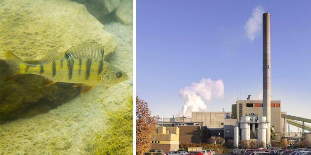 Win-win när varmvatten byts mot fiskbajs