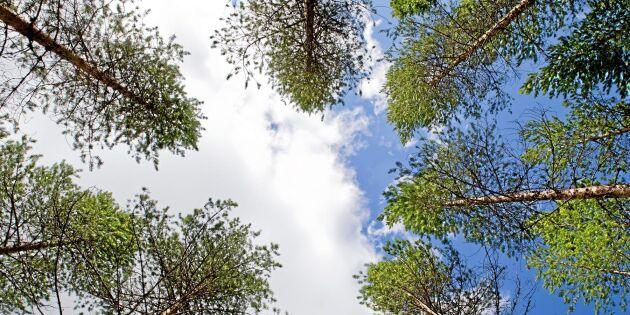 Stor positiv klimatpåverkan från SCA