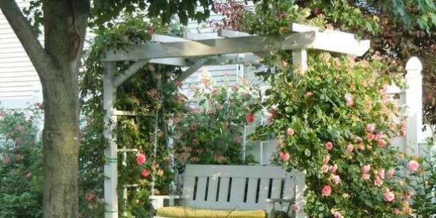 Härligt häng! 19 gungande drömplatser i trädgården