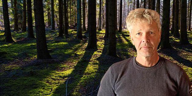 Svenskt skogsbruk bör inte begränsas av klimatskäl