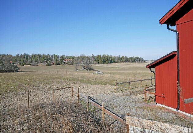 Snart växer gräset frodigt på betena. Österby gård har 50 hektar i träda som skulle bli bra beten. Men vågar de satsa på att bygga ett nytt stall?