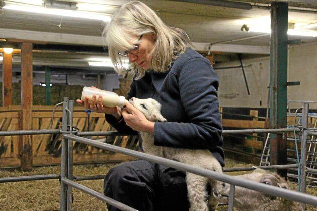 Ibland får man hjälpa naturen på traven om mjölken inte riktigt räcker till. Här ser Birgitta Hansson till att en tvådagars får i sig ordentligt med mat.