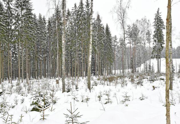 Hur mycket koldioxid våra träd mäktar med att ta upp från atmosfären kan ha stor betydelse för att bromsa effekterna av koldioxidutsläppen.