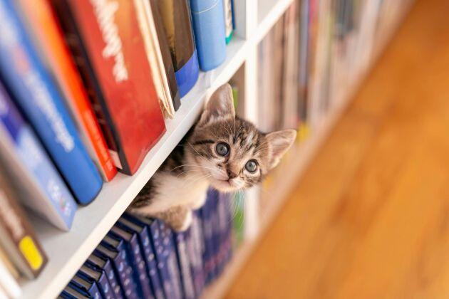 Mätt eller inte. En katt spanar alltid efter något att jaga.
