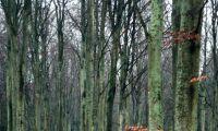 Skogstyskland i siffror