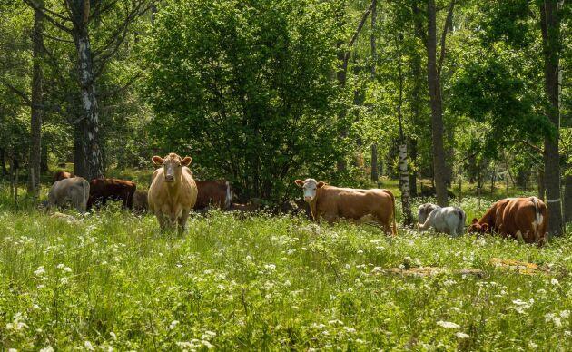 Mjölkbönderna behöver konsumenternas förtroende för att få sin mjölk såld, skriver debattören.