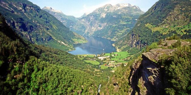 Ljust läge för den norska skogen