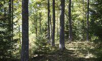 Blandskog kan motverka skogsskador vid varmare klimat