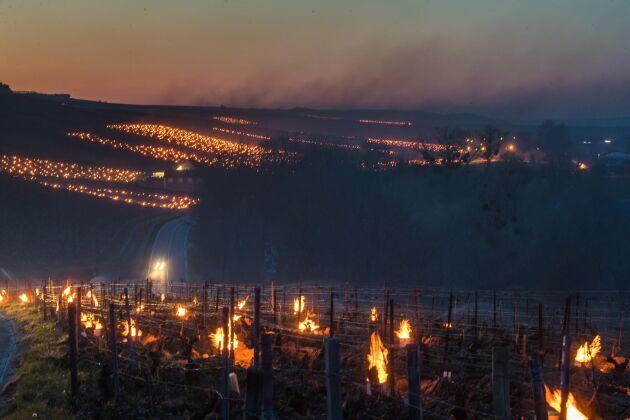Vinodlare i Chablis, Frankrike, försöker med hjälp av eld skydda skördarna från frost.