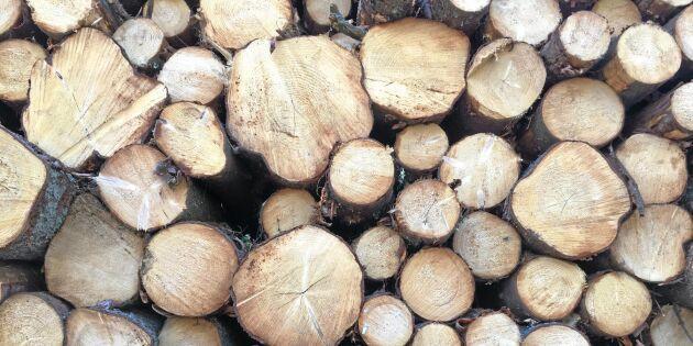 Trots domen - Skogsstyrelsen ändrar ingenting