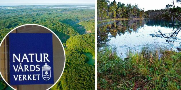 Naturvårdsverket gör historisk satsning på skydd av natur