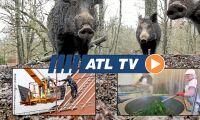 ATL TV: Jägare förbereder sig för svinpest