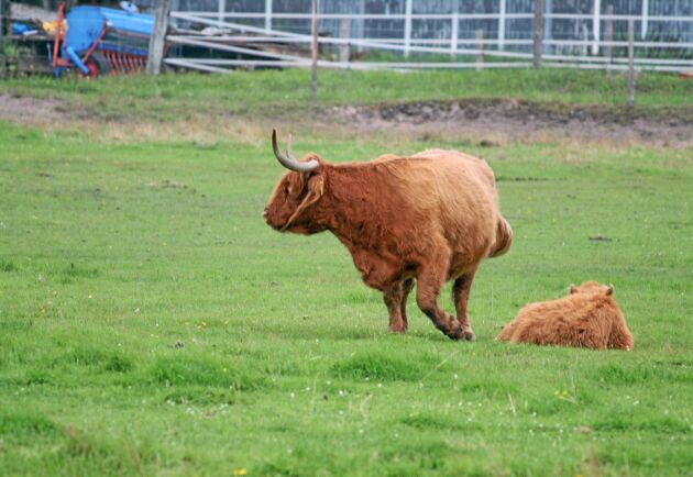 För den gotländska djurproduktionen beräknas kostnaden för torekan uppgå till 700 – 800 miljoner kronor.