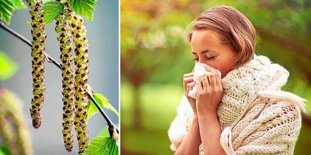 Pollensäsongen kan bli den värsta på 45 år
