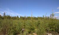 Regeringen vill se bättre konkurrens i skogsindustrin