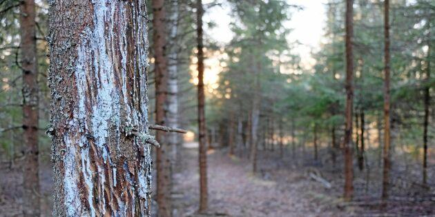 Problemen med barkgnagande kronhjortar sprider sig norrut