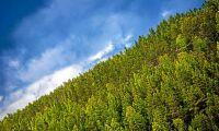70 miljoner till forskningsplattformen Treesearch