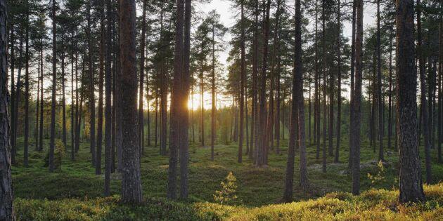 Stor satsning på fördjupad skoglig forskning