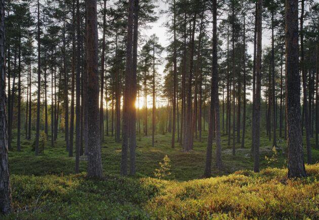 Forskningssamarbetet mellan Sverige och Finland fortsätter.