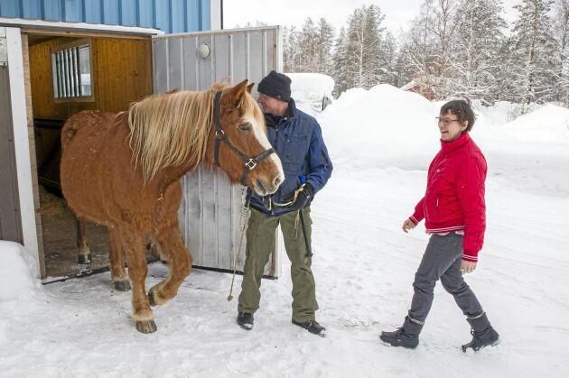 Knut Enström och Jaana Alamäki Enström har inte bara getter, på gården finns även en finsk arbetshäst som Knut bland annat använder i den egna skogen.