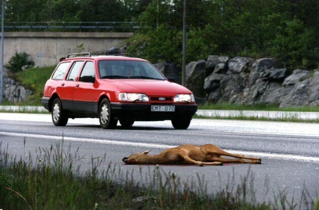 Viltolyckor med råddjur är vanligast, följt av olyckor med älgar och vildsvin.