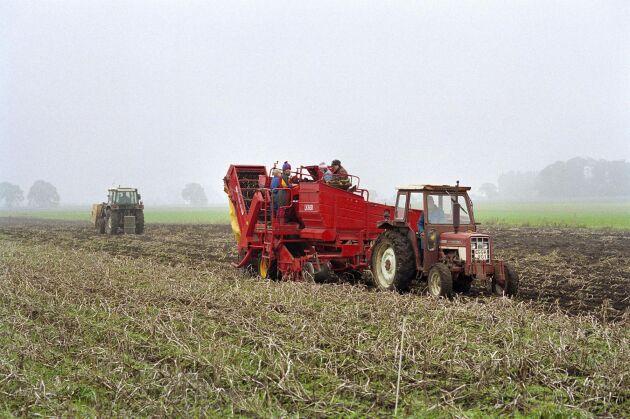 Rötor och andra sjukdomar har hittats i de prover som gjorts i fyra stora potatislän.