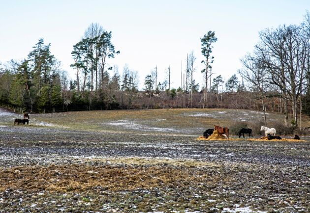 Stuteri Nådhammar föder upp lipizzanerhästar och svenska halvblod har en verksamhet med både lösdrift och stall.