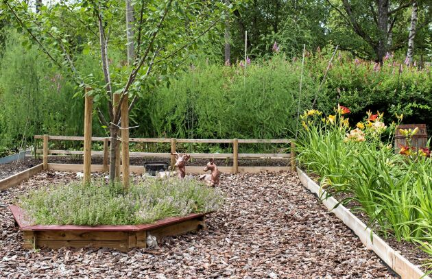 Under plommonträdet har de planterat timjan (älskas av bin) och utanför ligger pinjebark som dekoration. I rabatten intill växer dagliljor i olika sorter och färger.