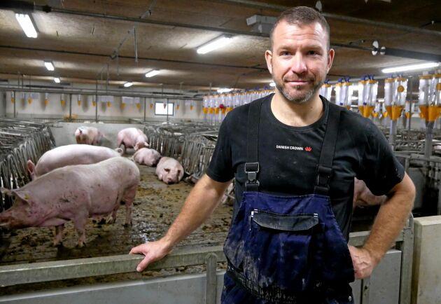 Danska grisbonden Jonas Würtz från Go gris visar upp sin gård med delvis lösgående suggor.