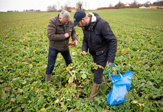 Uppföljning. Måns Edensten och Thomas Wildt-Persson på BASF tar prover för att kunna utvärdera behandlingen.