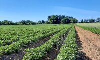 Gensaxen säkraste alternativet för växtförädling