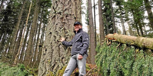 Lärorik läsarresa i de skotska skogarna