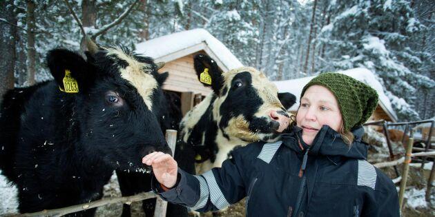 Så ska Norrbotten bli Sveriges Provence