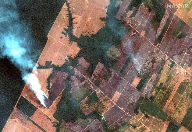 Satellitbild från 15 augusti visar bränder i delstaten Rondonia.