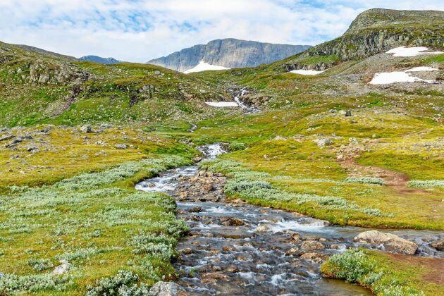 En vacker fjällbäck i trakterna av Helags i Jämtland. Ha koll på vad som finns uppströms. Stugor? Tältläger? Samlingar av renar? Är du osäker så rena vattnet.