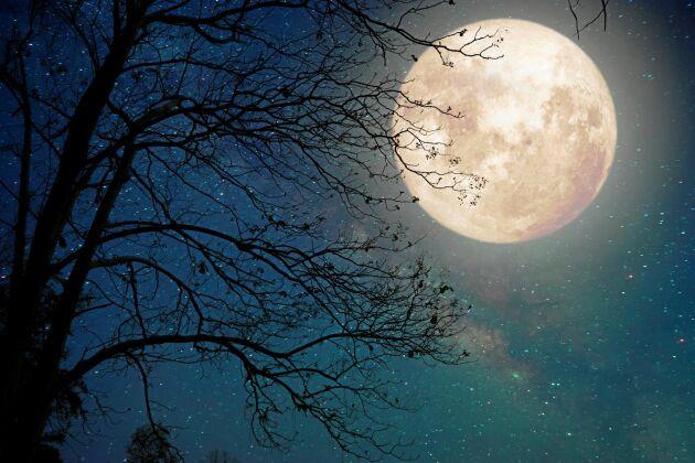Månen är mystisk och fascinerande på många sätt. Här får du 5 spännande fakta om månen!