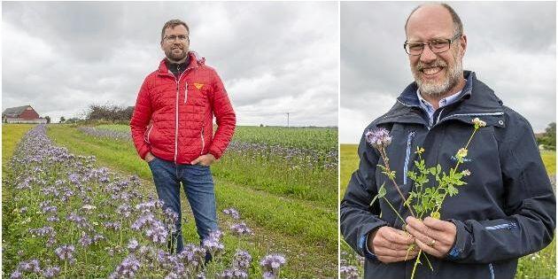 Växande intresse för blommande kantzoner