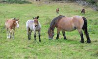 Nya gödselregler för hästar föreslås
