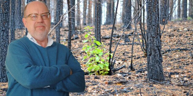 Se sanningen i vitögat – klimatkrisen har nått skogen