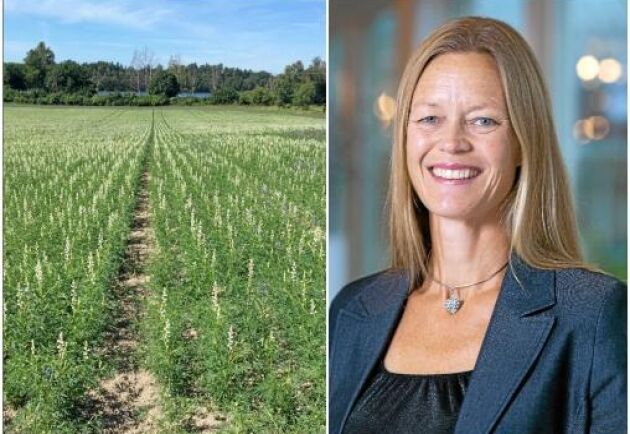 """""""Det finns en insikt om att man inte kan ersätta kött med vad som helst. Avokado, mandlar och soja kan också vara problematiska ur ett hållbarhetsperspektiv"""", säger Åsa Lannhard Öberg på Jordbruksverket."""