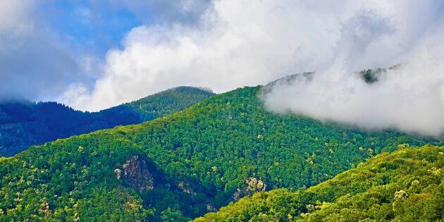Miljöorganisationer anmäler Rumänien för avverkning