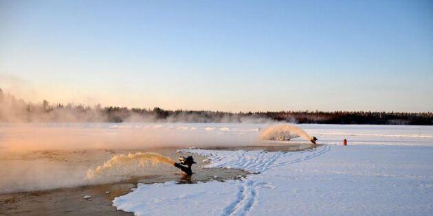 Isande kyla hjälpte skogsbolag med avverkning