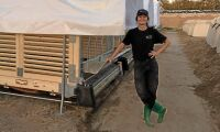 Kinesiska forskare testar svensk kalvbox