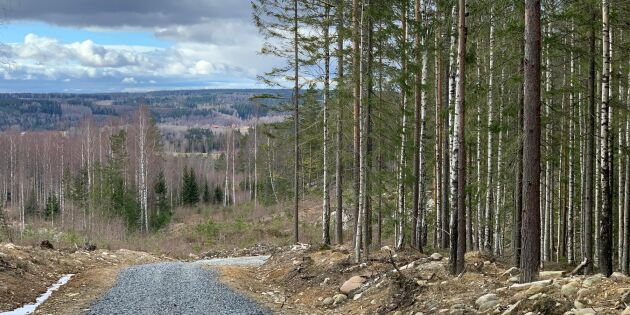 Rekordpriser väntas på Bergslagsskog