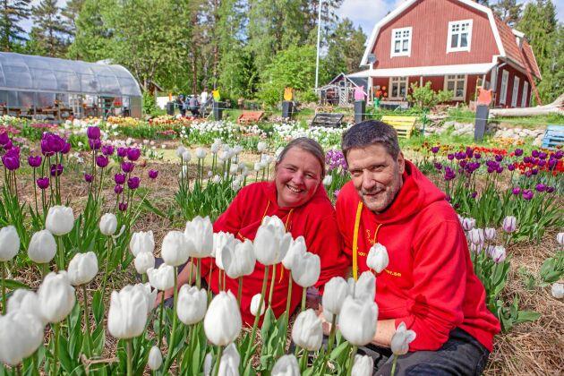 För fem år sedan började Carolina och Hans med att bli Sverige (troligen) nordligaste tulpanodlare.