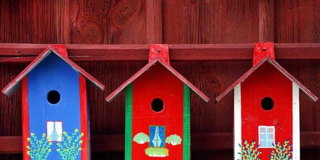 3 skäl att rensa fågelholken
