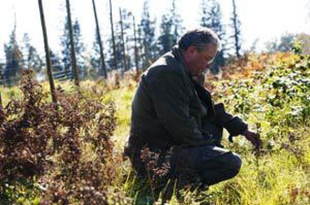 Invid sin stuga har Bertil Carlsson valt bort granen. I stället har han planterat två hektar med vackra lövträd som ek, bok och fågelbär. Foto: Anders Andersson