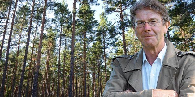 Lågt förädlade träprodukter pressar priserna